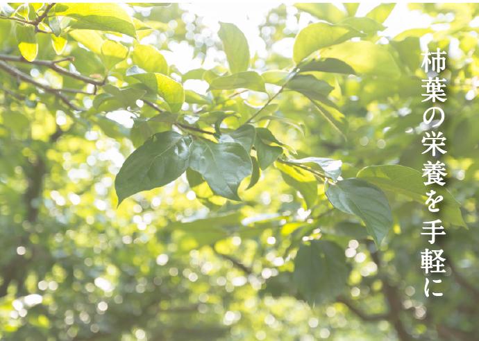 食べる柿の葉 飲む柿の葉 KAKIHA